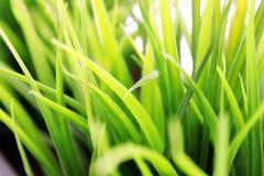 Cierre de la hierba verde para arriba Imágenes de archivo libres de regalías
