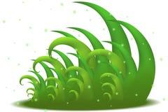 Cierre de la hierba verde para arriba Imagen de archivo