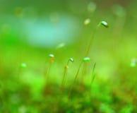 Cierre de la hierba verde para arriba fotos de archivo libres de regalías