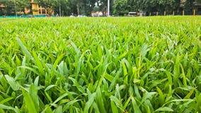 Cierre de la hierba verde para arriba Fotos de archivo