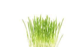 Cierre de la hierba verde para arriba, en el fondo blanco Imagenes de archivo