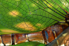 Cierre de la libélula Fotos de archivo libres de regalías