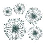 Cierre de la margarita de la manzanilla encima de la visión superior Elemento botánico aislado del diseño floral ilustración del vector
