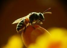Cierre de la mosca de la casa para arriba Imagen de archivo libre de regalías