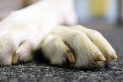 Cierre de la pata del perro para arriba fotografía de archivo libre de regalías