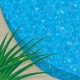 Cierre de la piscina para arriba con la planta tropical Fotografía de archivo