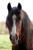 Cierre de la pista de caballo para arriba Foto de archivo libre de regalías