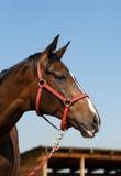 Cierre de la pista de caballo para arriba Imagenes de archivo