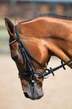 Cierre de la pista de caballo para arriba Fotos de archivo