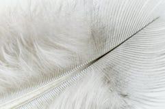 Cierre de la pluma blanca para arriba Fotografía de archivo libre de regalías