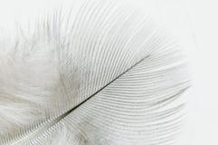 Cierre de la pluma blanca para arriba Imagen de archivo