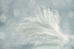 Cierre de la pluma blanca para arriba Foto de archivo