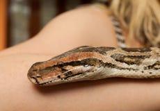 Cierre de la serpiente de la boa para arriba Imagen de archivo
