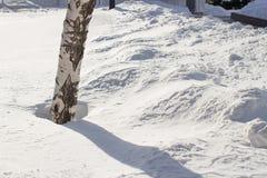 Cierre de la superficie de la nieve encima de la macro, fondo del invierno, abedul Imágenes de archivo libres de regalías
