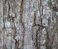 Cierre de la textura de la corteza de árbol encima de la foto Brown y fondo de madera gris ilustración del vector