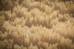 Cierre de la textura de la onda de arena para arriba Fotografía de archivo
