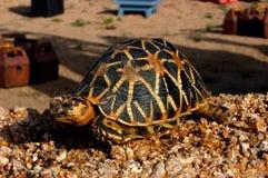 Cierre de la tortuga en el parque zoológico Fotos de archivo
