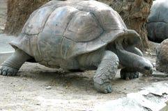 Cierre de la tortuga en el parque zoológico Foto de archivo libre de regalías