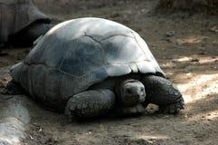 Cierre de la tortuga en el parque zoológico Fotografía de archivo libre de regalías