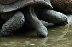 Cierre de la tortuga en el parque zoológico Imagen de archivo