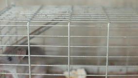 Cierre de la trampa del ratón para arriba almacen de metraje de vídeo