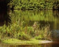 Cierre de la vegetación de la isla del lago para arriba Foto de archivo