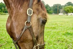 Cierre de la vista lateral de la cabeza de caballo encima de hacer frente a la derecha fotografía de archivo