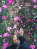 Cierre de Op. Sys. de la visión encima del paseo del pie en jardín de flores del cosmos Imagenes de archivo