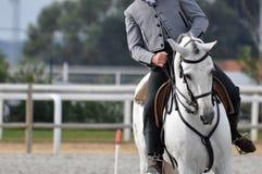 Cierre de trabajo del caballo de la equitación para arriba Fotos de archivo libres de regalías