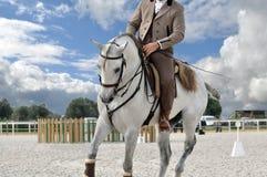 Cierre de trabajo del caballo de la equitación para arriba Foto de archivo libre de regalías
