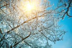 Cierre del árbol del invierno para arriba Fotografía de archivo libre de regalías