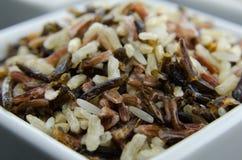 Cierre del arroz salvaje para arriba Imágenes de archivo libres de regalías