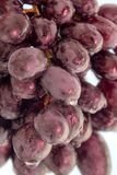 Cierre del azul de las uvas para arriba Imagen de archivo