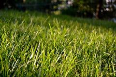 Cierre del campo de hierba verde para arriba en un día soleado foto de archivo libre de regalías