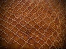 Cierre del cuero del reptil de Brown para arriba Fotos de archivo libres de regalías