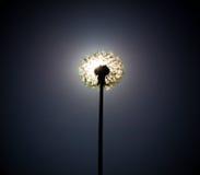 Cierre del diente de león el disco del sol Fotos de archivo