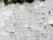 Cierre del documento de información de la textura de la corteza de abedul para arriba Fotos de archivo