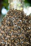 Cierre del enjambre de la abeja de la miel para arriba Imágenes de archivo libres de regalías