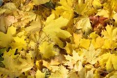 Cierre del fondo de las hojas de otoño para arriba Foto de archivo