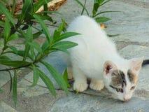 Cierre del gato de Smalll para arriba Foto de archivo libre de regalías