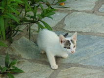 Cierre del gato de Smalll para arriba Fotos de archivo libres de regalías