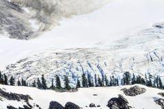 Cierre del glaciar de Shuksan del soporte encima del artista Point Washingto de los árboles de hoja perenne Fotografía de archivo libre de regalías