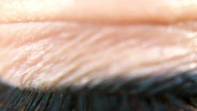 Cierre del ojo de la mujer de color marrón para arriba almacen de video