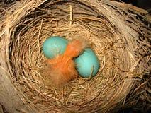 Cierre del pájaro de bebé para arriba Imagen de archivo libre de regalías