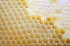 Cierre del peine de la miel para arriba Fotos de archivo