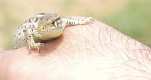 Cierre del perfil del lagarto para arriba Cabeza del primer del lagarto verde metrajes