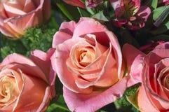 Cierre del ramo de la rosa del rosa para arriba Imagenes de archivo