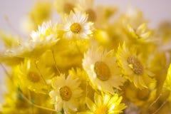 Cierre del ramo de las flores del amarillo para arriba Foto de archivo libre de regalías