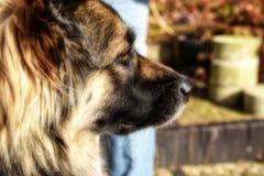 Cierre del retrato del perro para arriba en el mejor amigo del sol Imagen de archivo