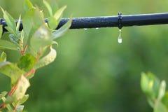 Cierre del sistema de la irrigación por goteo para arriba Fotos de archivo